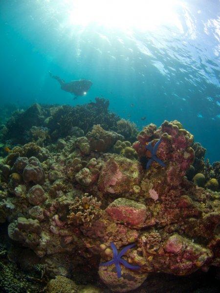 Подводные художественные фотографии Дэвида Бенца и Мелани Шулер (19 фото)