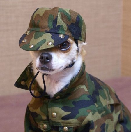 Монтжиро – самая стильная собака на свете (23 фото)