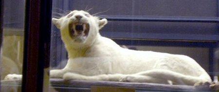 10 Невероятных животных-альбиносов