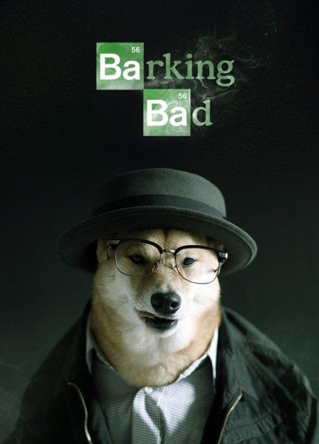 Пёс Даппер демонстрирует мужскую одежду (14 фото)