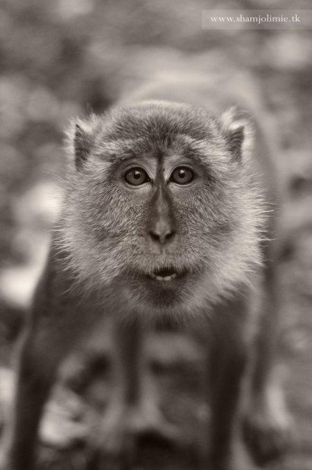 Выразительные фотографии с животными от Шэм Джолими (26 шт)