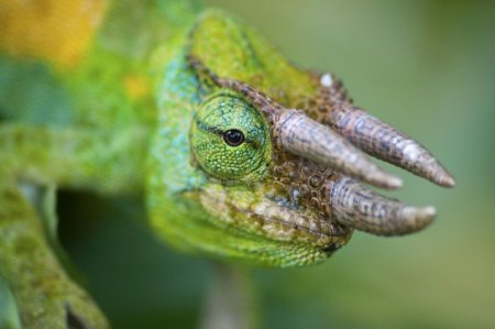 10 Странных фактов о рептилиях