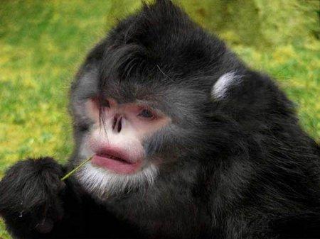 Новые виды животных, открытые в последние годы (8 фото)