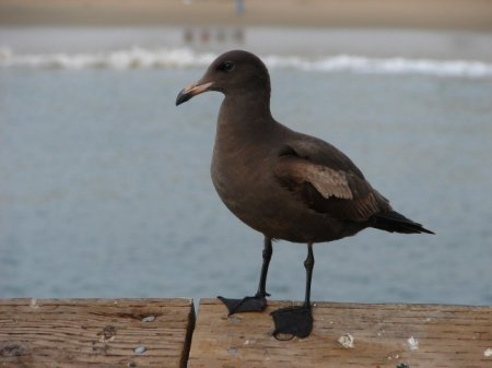 Топ-10: Интересные факты о чайках