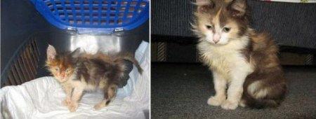 Преображение бездомных котов (13 фото)