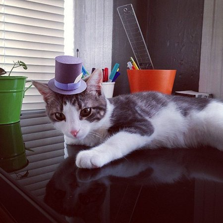 Коты в шляпах Максвелл и Перец (15 фото)