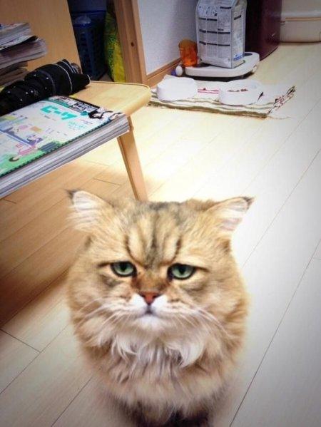 Расстроенный котик Фу-Чан (10 фото)