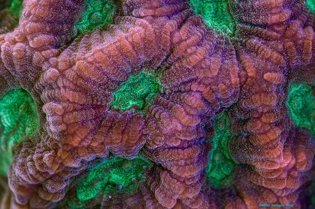 Коралловый мир в макрофотографиях (20 фото)
