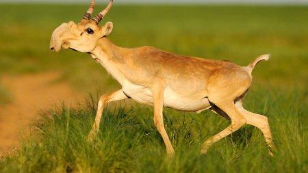 10 Странных животных – причуд природы