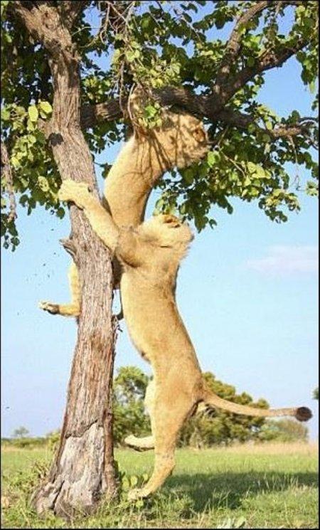 Большие кошки такие кошки (11 фото)