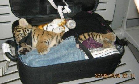 10 Невероятных случаев контрабанды животных