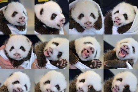 Мир животных в фотографиях (14 фото)