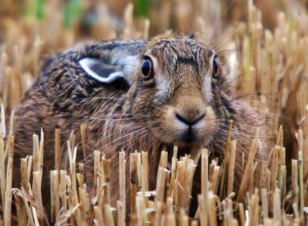 Очаровательные животные в фотографиях Адама Татлоу (19 фото)