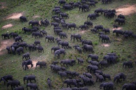 Массовые скопления животных (10 фото)