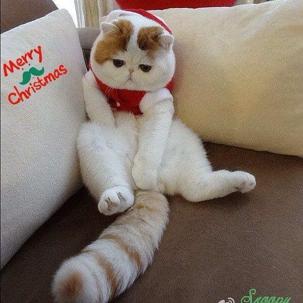 Китайская горная кошка: описание внешности и характера кота, ареал