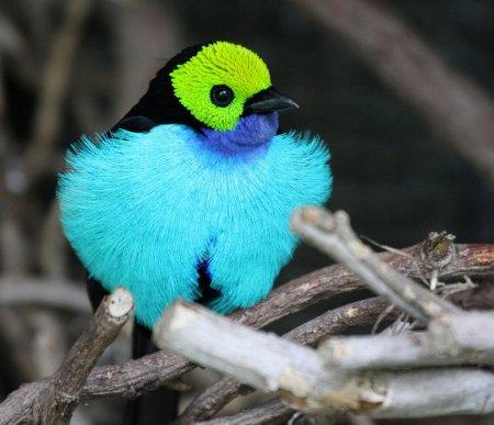 Самые красивые птицы планеты (10 фото)
