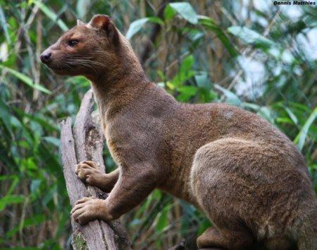 Топ-10 Странных и изумительных существ из Мадагаскара