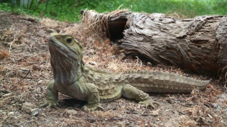 Топ-10: Самые старые виды обычных животных, которые дожили до наших дней