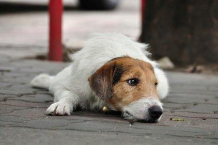 Топ-10 самых трогательных историй о собаках за всю историю