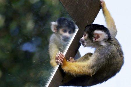 Животный мир в фотографиях (14 фото)