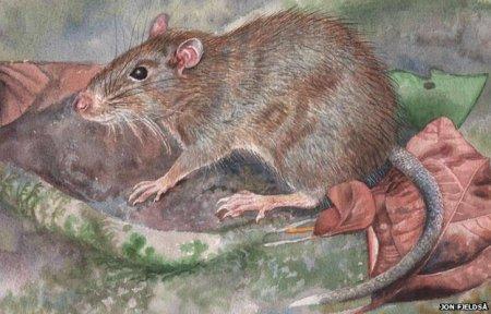 Топ-10 Прикольных видов животных, которые были обнаружены лишь недавно