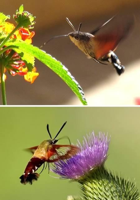 10 Самых странно выглядящих насекомых