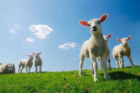 10 Ужасающих случаев массовой гибели животных в 2013 году