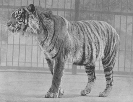 Топ-10 Вымерших животных, которые, по неподтверждённым свидетельствам, всё ещё живы