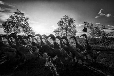 Самые яркие фотографии конкурса National Geographic Photography Contest 2013 (15 фото)