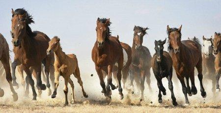 Грациозность лошадей в серии снимков Тима Флэка (16 фото)