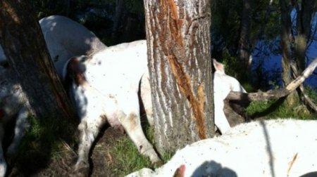 Топ-10: Животные, погибшие в результате трагических несчастных случаев