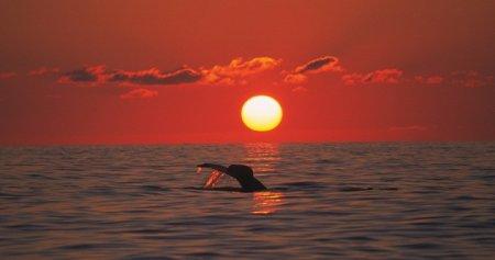 Топ-10 Колоссальных фактов о китах