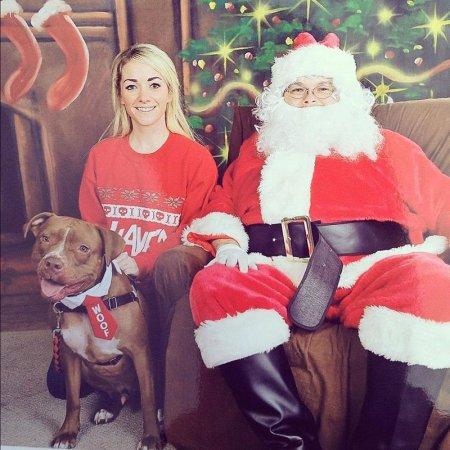 Питбуль Валентино: самый модный пёс в Интернете (15 фото)