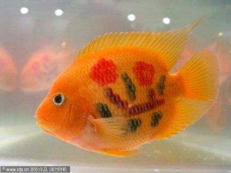 Топ-10 Историй об испуганных золотых рыбках