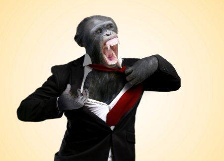 Топ-10 Странных фактов о зоопарках