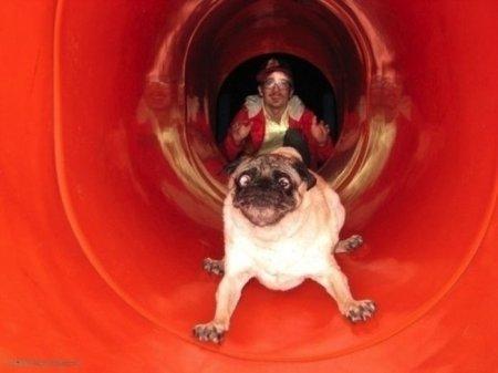 Самые забавные и неуклюжие собаки этого года (27 фото)