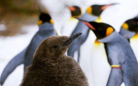 Мир животных в фотографиях (12 фото)