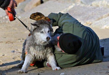 Спасение хаски из ледяного плена (9 фото)
