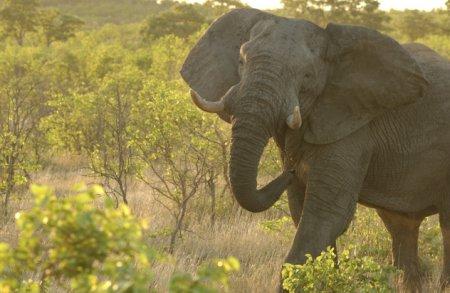 Топ-10 прикольных и причудливых фактов о животных, которые мы узнали в 2013 году