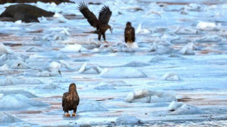 Аномальный холод в Норвегии: в заливе о. Ловунн замёрзли миллионы рыб (8 фото)