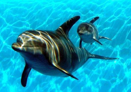 Новости из мира животных (14 фото)