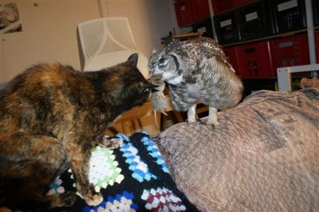 Благодарная сова приносит своему спасителю добычу (16 фото)