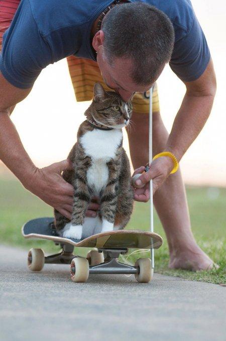 Кошка Диджа – скейтбордист (10 фото + видео)