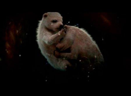 Животные в утробе матери (8 фото)