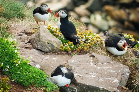 Любительская орнитология на скалах Латрабьярг (16 фото)