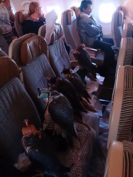 Необычные пассажиры авиарейса (4 фото)