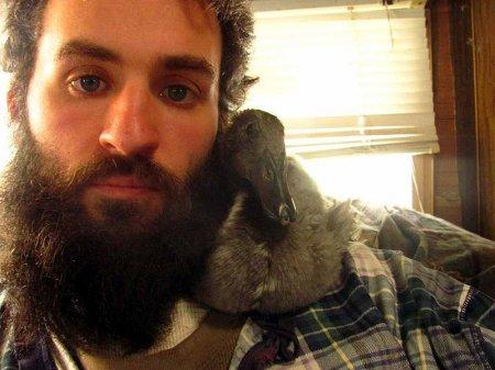 Утёнок Пип, выросший в бороде (15 фото)