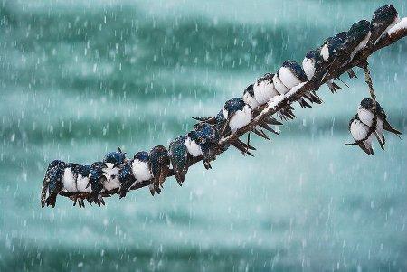 Царство зверей в зимнее время (18 фото)