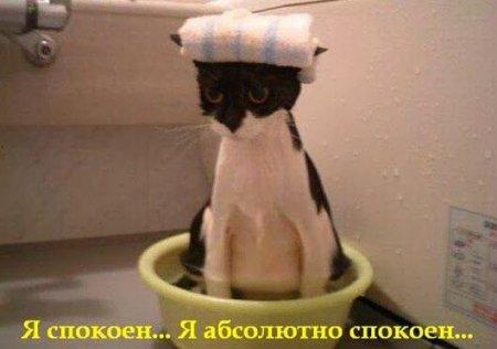 Купаем кошку правильно (12 фото)