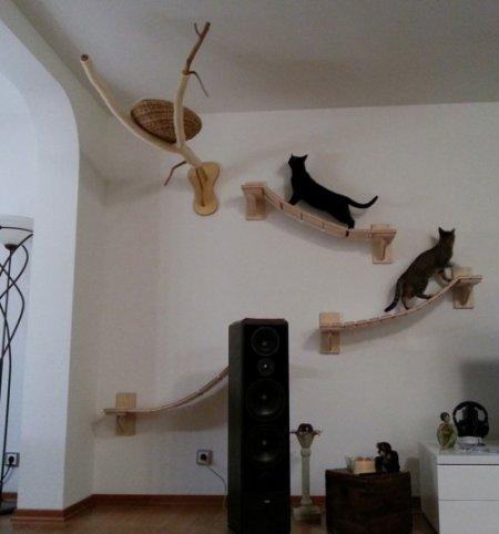 Кошачья игровая площадка в гостиной (12 фото)